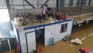 Centro de acogida de animales alcorcon