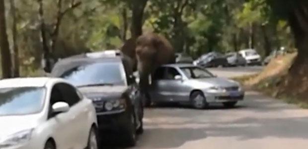 elefante1p