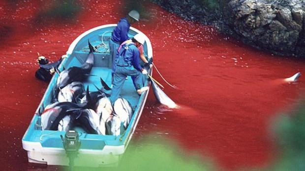 matanza-delfines-japon-360_0