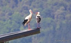 Uzelai_y_su_pareja_sobre_el_Bird_Center
