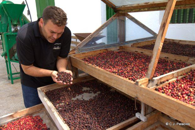 Secadero de café típico de Agaete, inspirado en el modelo hondureño.