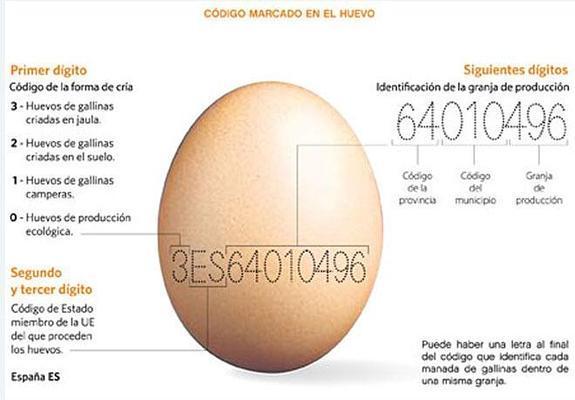 ¿Cómo leer el código de un huevo? Es importante para la calidad de vida de la gallina