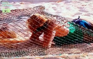 Un pez llamado Mila. (TELECINCO)