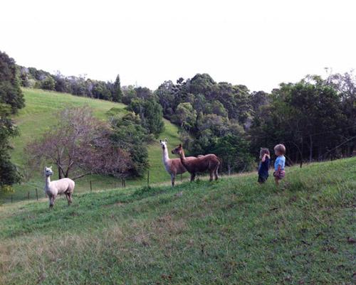 La pareja, que vive actualmente en Australia, nos presentó a sus nuevos vecinos: alpacas.