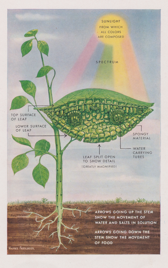 'Leaf' - Cutaway World