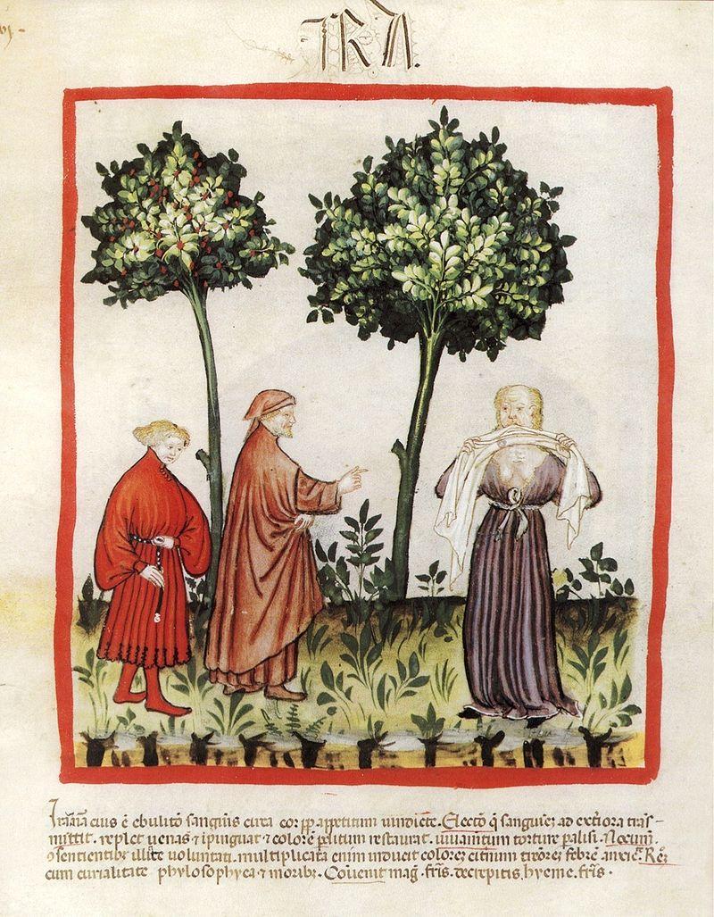 """La ira representada en una miniatura del códice """"Tacuinum Sanitatis"""", siglo XIV (Imagen: Dominio Público)"""