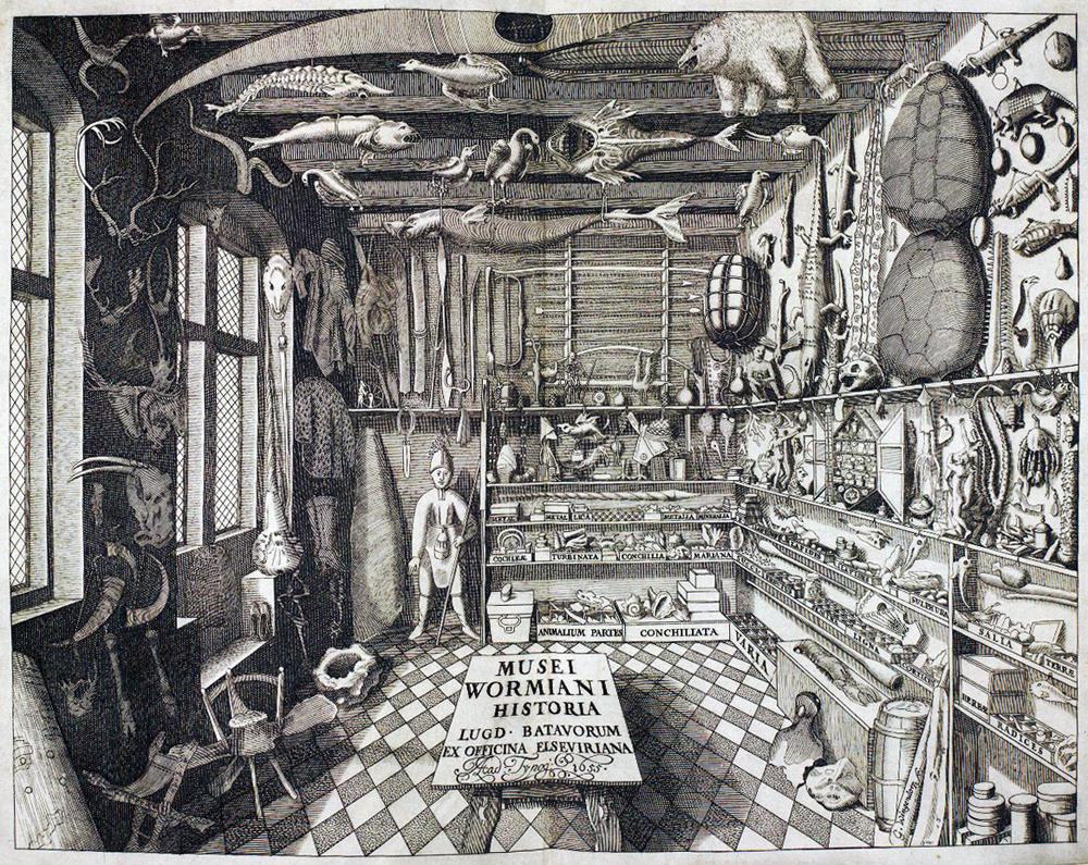 'Musei Wormiani', grabado de 1655 del gabinete de curiosidades de Ole Worm - Foto: Wikimedia commons