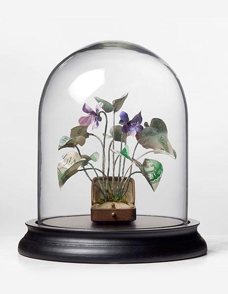 'Specimen Viola Odorata' - Justine Smith