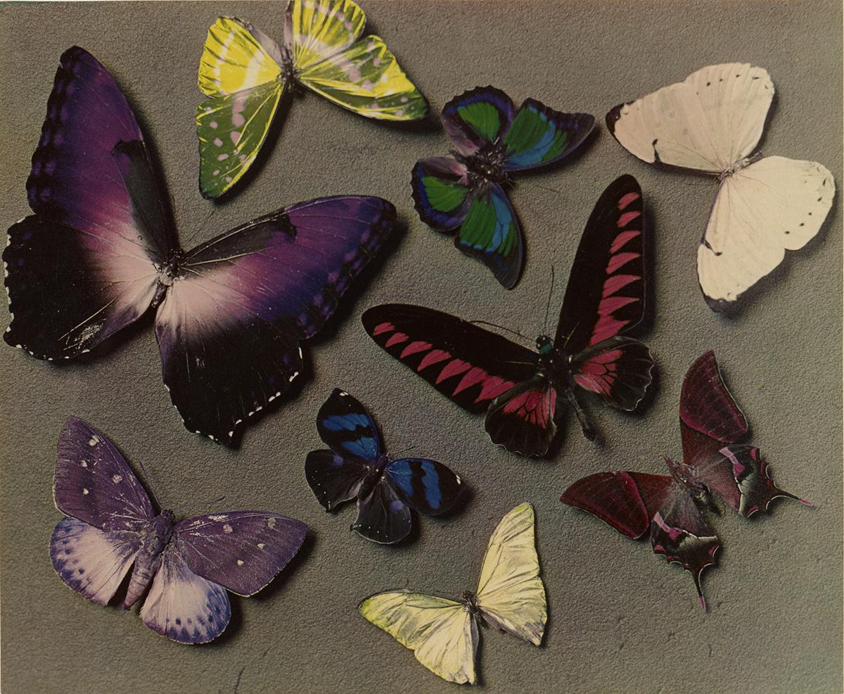 Man Ray - Butterflies, 1935 - © Man Ray Trust ARS-ADAGP, The J. Paul Getty Museum, Los Angeles