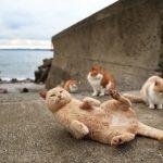 Isla de los Gatos - Atlas Obscura