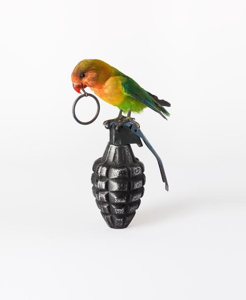 'Lovebird with Grenade' - Nancy Fouts - Foto: www.nancyfouts.com