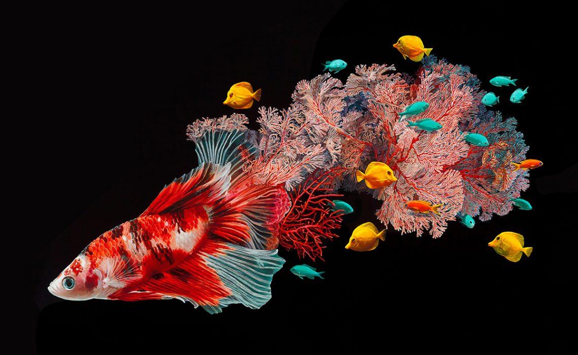 Mermaid - Lisa Ericson - Foto: lisaericson.com