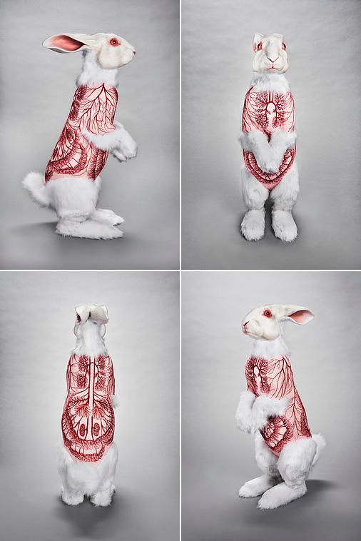 'Flayed Rabbit: Albino' - Deborah Simon - Foto: Dan Wonderly