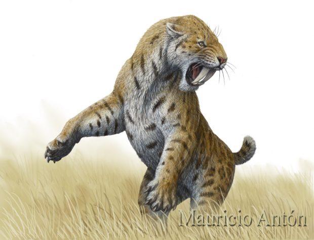 Smilodon, o tigre de dientes de sable. ©Mauricio Antón.