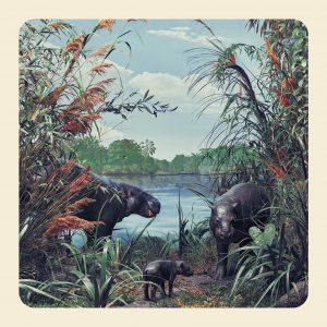 Hipopótamos. ©Jim Naughten