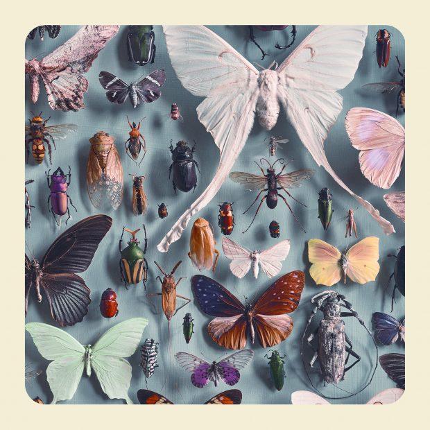Insectos de las montañas de Kong. ©Jim Naughten