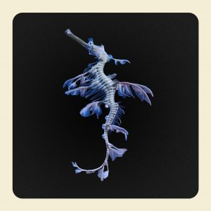 Dragón marino. ©Jim Naughten