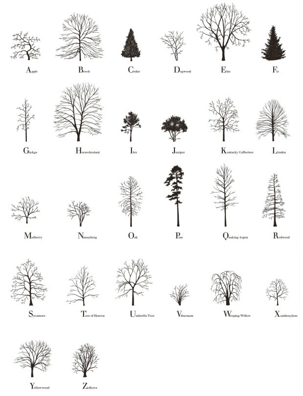 Katie Holten, Tree Alphabet, 2015, handmade offset print on paper, 308gm, 50 x 70 cm, edition of 50. Signed, numbered and dated by the artist.
