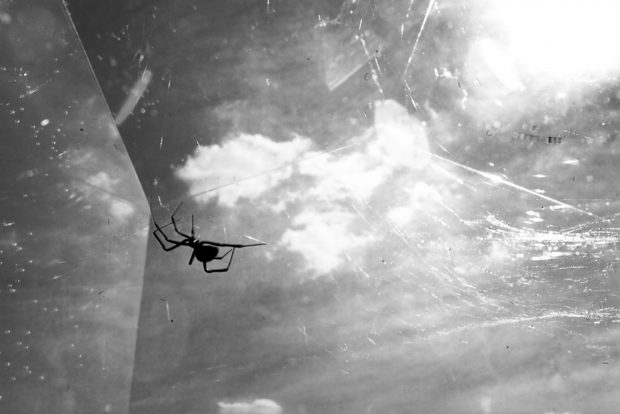 Tomás Saraceno. Hybrid webbing - a spider web constructed by two different kinds of spiders: Phase 1 (two weeks): Latrodectus mactans. Phase 2 (three months): Tegenaria, 2010 © Photography by Studio Tomás Saraceno, 2010