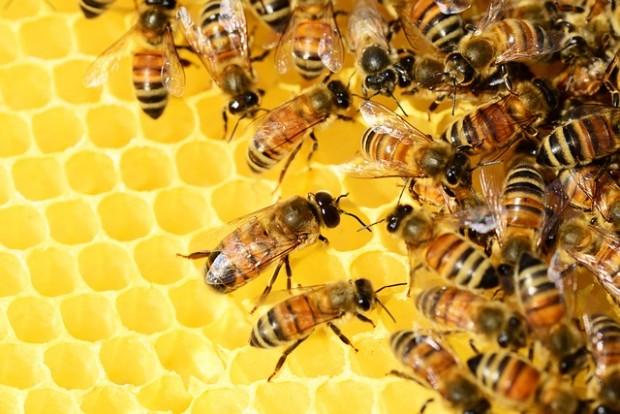 ¿Cuánto debería cobrar una abeja por hacer la miel?