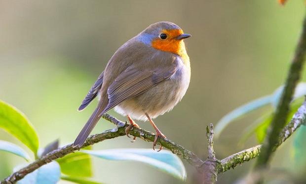 ¿Por qué los pájaros no se caen de la ramas cuando duermen?