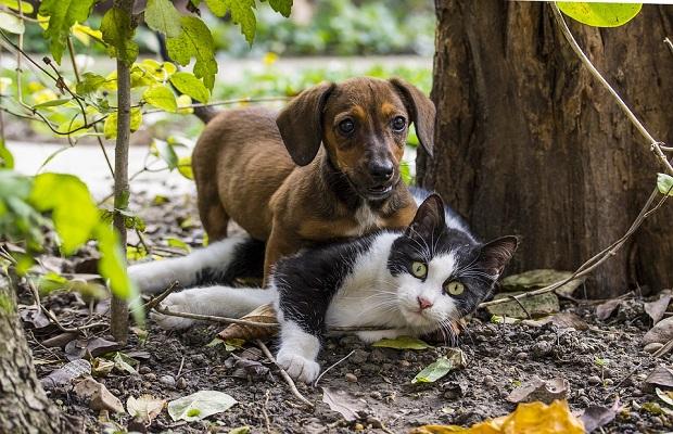 ¿Por qué los perros persiguen a los gatos?