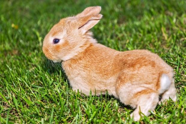 ¿De dónde surge la creencia y superstición de que una pata de conejo trae buena suerte?