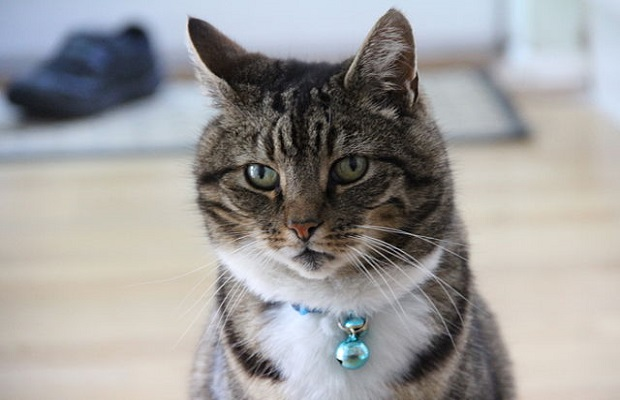 ¿Cuál es el origen de la expresión 'poner el cascabel al gato'?