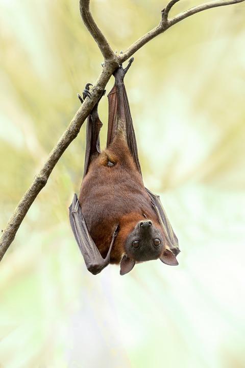 El curioso origen etimológico de la palabra murciélago