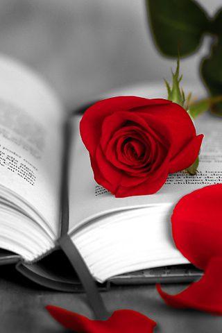 El origen de regalar una rosa y un libro en Sant Jordi