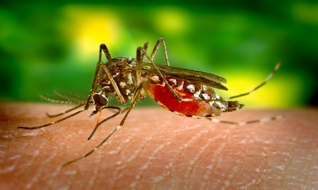 ¿Por qué un mosquito con su picadura puede transmitirnos infinidad de enfermedades pero no el SIDA?