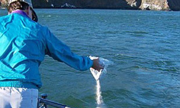 ¿Es legal esparcir las cenizas de un difunto en el mar?