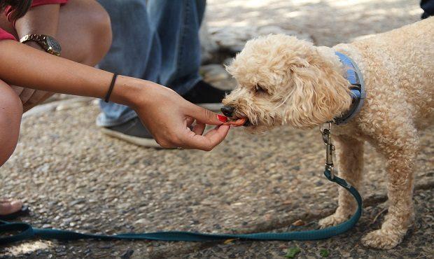 Algunos alimentos que nos encantan pero que pueden ser muy perjudiciales si se los das a tu perro