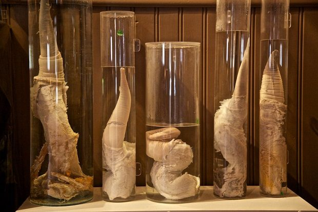 El curioso museo dedicado al pene en Islandia
