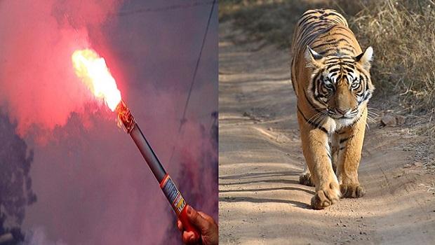 Bengala, la región asiática que dio nombre a la especie de un tigre y a un tipo de fuego artificial
