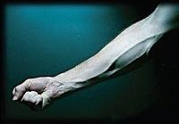 El origen etimológico de media docena de partes del cuerpo humano