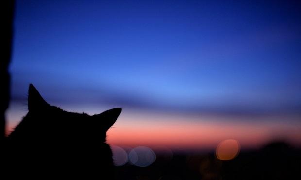 ¿Cuál es el origen de la expresión 'De noche, todos los gatos son pardos'?