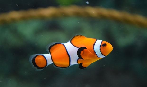 ¿De dónde surge decir que alguien 'está pez' para señalar su desconocimiento sobre algo?