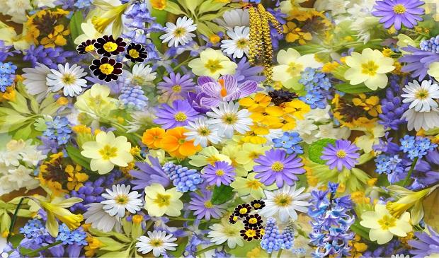 Cinco curiosidades sobre la flor que quizá te gustaría conocer