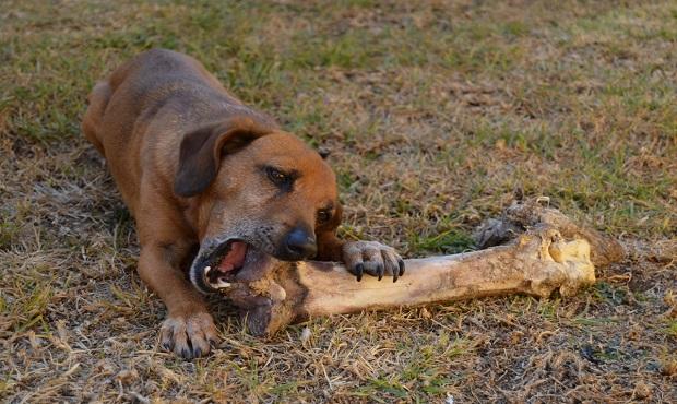 ¿De dónde surge la expresión 'A otro perro con ese hueso'?