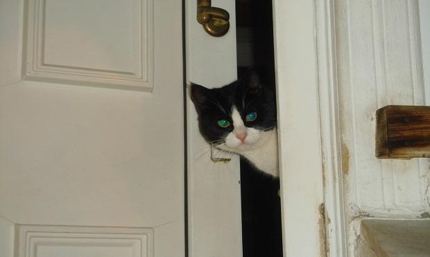 El curioso origen de la famosa expresión 'La curiosidad mató al gato'
