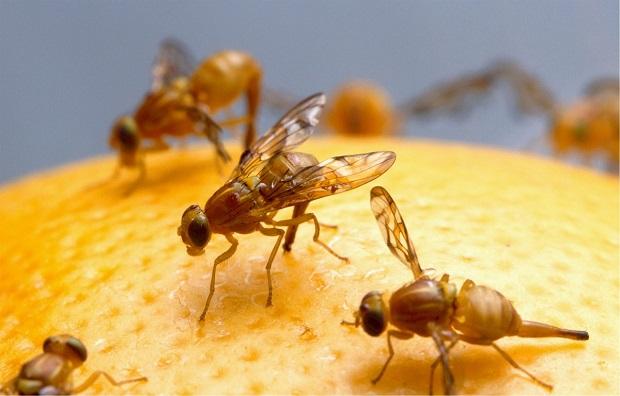 ¿Cuál es el origen de la expresión 'por si las moscas'?