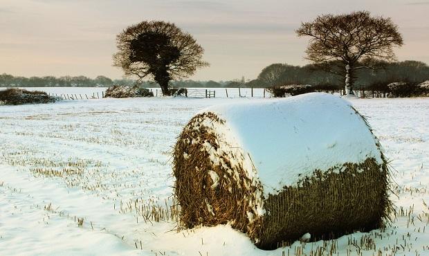 El origen y significado del refrán 'Año de nieves, año de bienes'