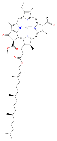 Clorofila a