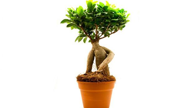 Los mejores profesionales en reparaciones de todo tipo de averías del hogar en toda España te traen hoy las mejores plantas para purificar y limpiar el aire de tu hogar, eliminando polvo, humo, moho, bacterias y otras toxinas de tu casa.