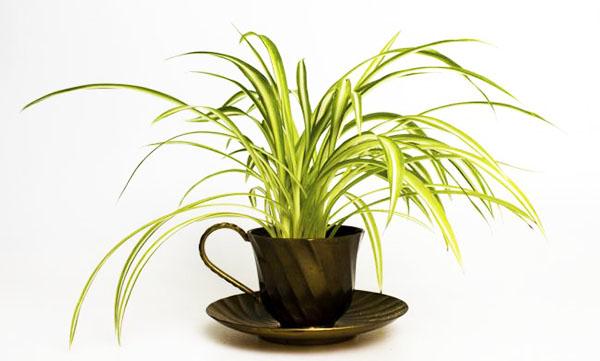 6 plantas muy baratas para purificar y desintoxicar el Plantas limpiadoras de aire