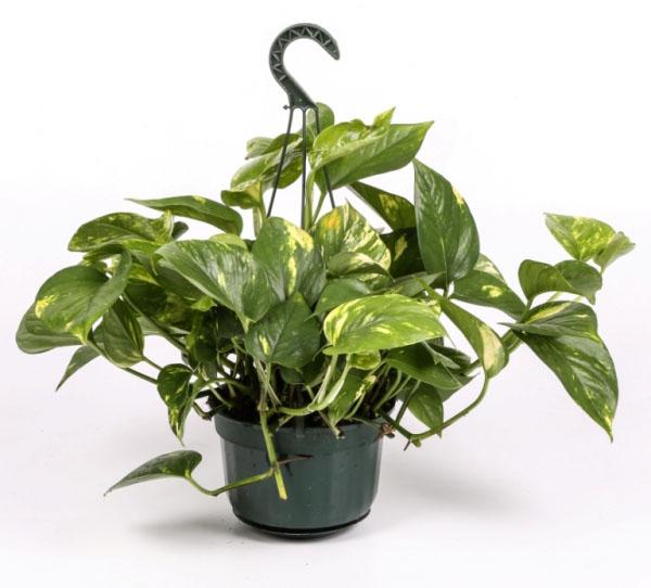 6 plantas muy baratas para purificar y desintoxicar el