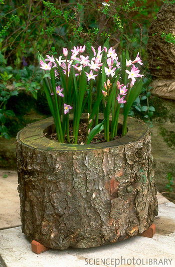 Los profesionales de Reparalia, expertos en reparaciones de todo tipo de averías del hogar en toda España, te traen ideas, consejos y trucos para aprender a reciclar madera, troncos y tablas con proyectos DIY y manualidades creativas espectaculares