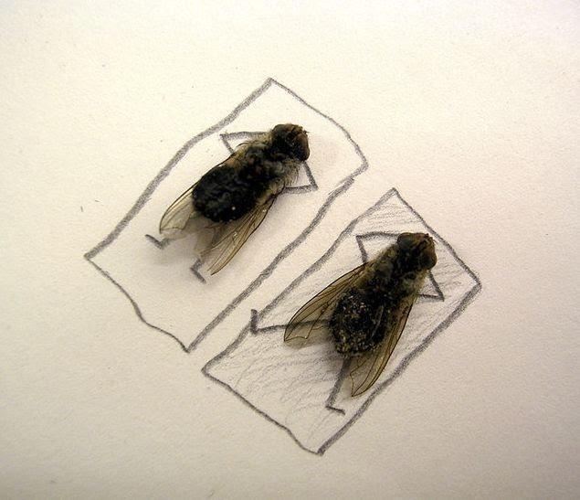 6 trucos efectivos para librarte de las moscas en casa este verano ...