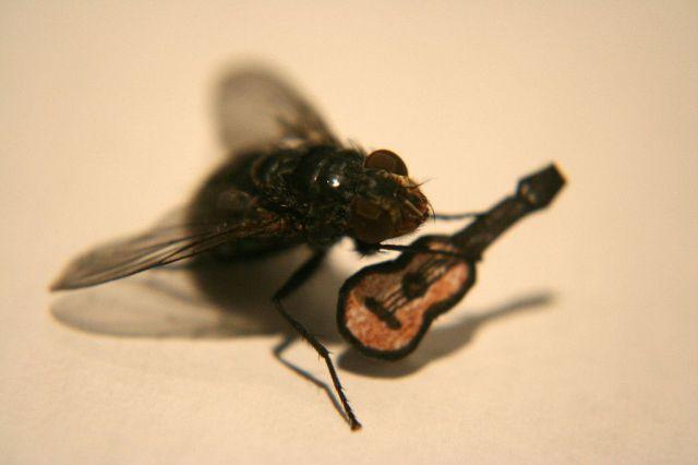 tiempo de vida de moscas y mosquitos